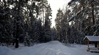 Выставка Российский Лес 2016